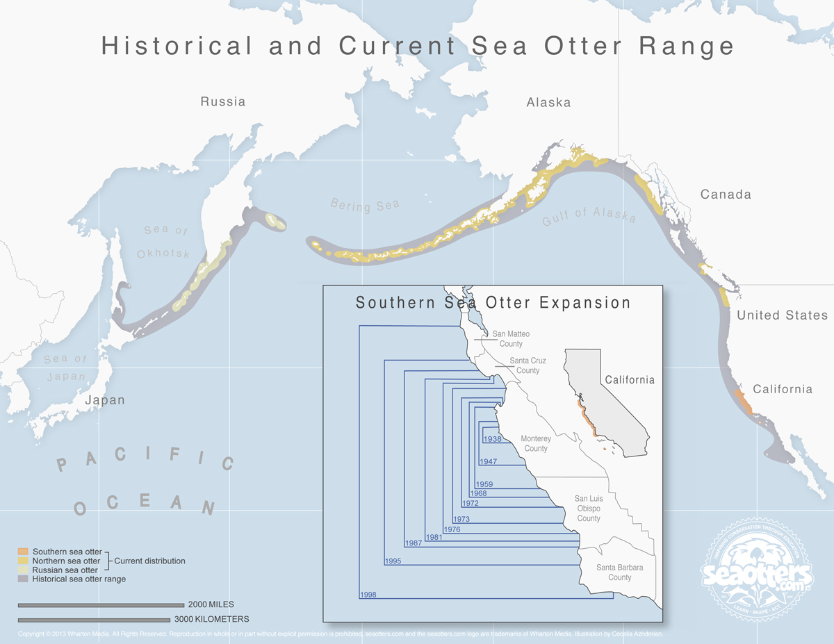 sea otter map