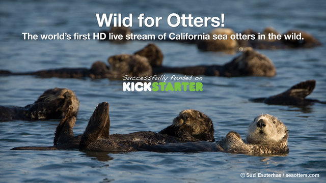 Seaotters.com's Wild for Otters Kickstarter Project Successfully Funded