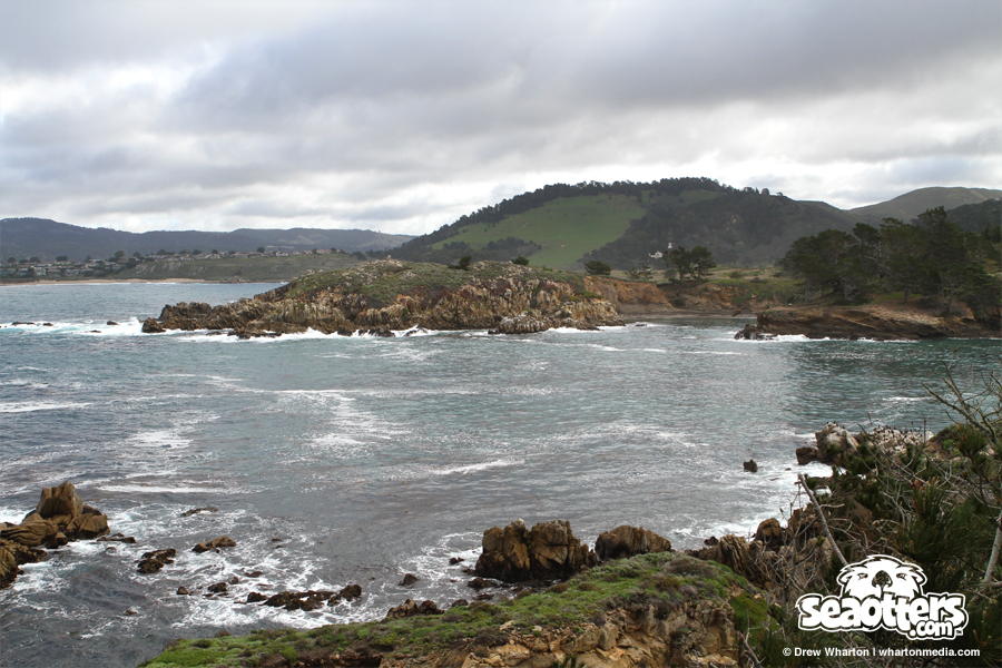 seaottersdotcom-point-lobos-whalers-cove