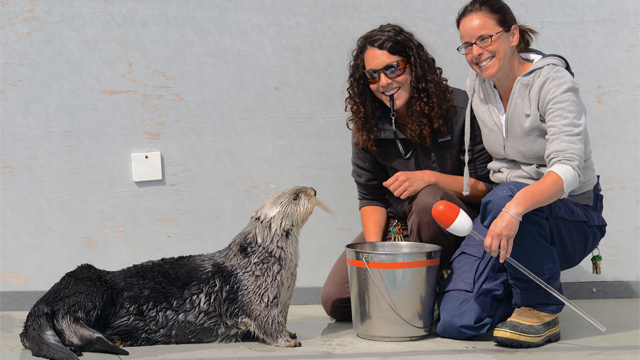 Lecture & LIVE Stream: Exploring the Sensory Biology of Sea Otters Through Cooperative Research