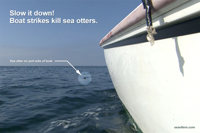 Boat strikes kill sea otters.