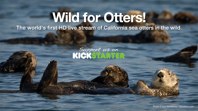 Seaotters.com's #WildforOtters Kickstarter Campaign has Launched!