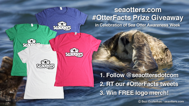 "Announcing the Sea Otter Awareness Week ""#OtterFacts"" Prize Giveaway!"