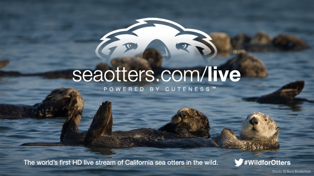 WildforOtters